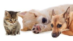 pets Imagem de Stock Royalty Free