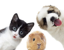 pets Obrazy Stock