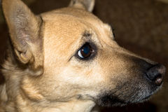 Pets шавка стоковое фото rf