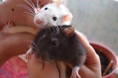 pets Obrazy Royalty Free
