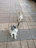 pets Imagen de archivo libre de regalías