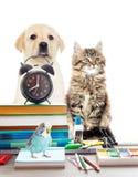 Pets and alarm clock Stock Photos