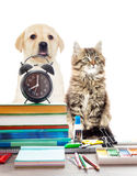 Pets and alarm clock Stock Image