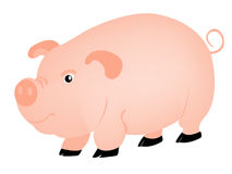 Pets animal pig Royalty Free Stock Photo