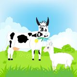 Pets animals on green meadow Stock Photos