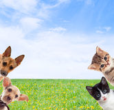 Pets. On a background of green grass Stock Photos