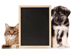 Pets with blackboard stock photography