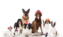 Pets carnival. Some dogs, cats and rabbits with different carnival hats Stock Image