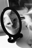 Pets. The cat looks in the mirror. Royalty Free Stock Images