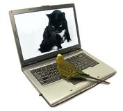 Pets chatting on internet Stock Photo