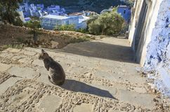Pets in Chefchauen. Pets on Street in medina of blue town Chefchaouen, Morocco Royalty Free Stock Photos