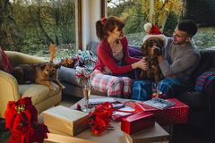 Pets at Christmas. Couple with their dogs at Christmas time Royalty Free Stock Photos
