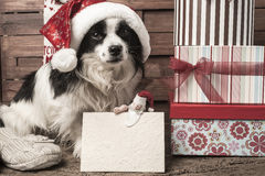 Pets  Christmas greeting postcard Royalty Free Stock Images