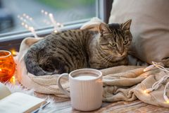 Tabby cat lying on window sill with book at home. Pets, christmas and hygge concept - tabby cat lying on window sill with book and garland lights at home Stock Photography