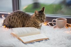 Tabby cat lying on window sill with book at home. Pets, christmas and hygge concept - tabby cat lying on window sill with book and garland lights at home Royalty Free Stock Photos