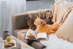 Two cats lying on sofa at home Royalty Free Stock Photography