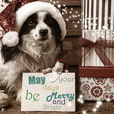Pets  Christmas wishes cards Royalty Free Stock Photo