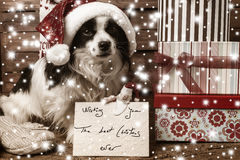 Pets  Christmas wishing postcard Stock Images