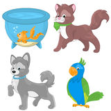 Pets collection Royalty Free Stock Images