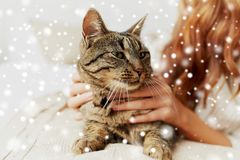Cat lying in bed at home Stock Photos