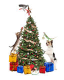 Pets Decorating Christmas Tree Royalty Free Stock Photography