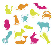Pets design Stock Photo