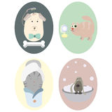 Pets: dog, cat. Grooming. Set of big round icons. Stock Images