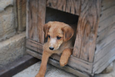 Pets - dog sitting in a box in the yard Stock Images