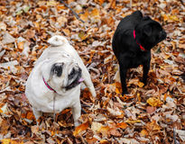 Pets. Dogs. Nature Royalty Free Stock Photography