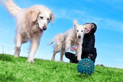 Pets and dogs.training and educating dogs.Companion pets concept. Woman and dogs playing in the park.Companion pets concept Royalty Free Stock Photo