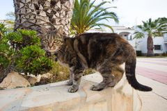 Pets and domestic animals concept - Cute cat wearing collar walking on the street stock images