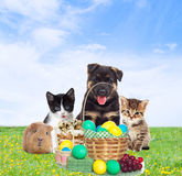 Pets and Easter. On a sky background Stock Image