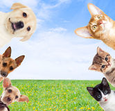 Pets on f green grass Stock Images