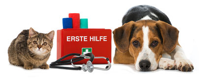 Pets first aid Royalty Free Stock Image