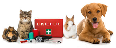 Pets first aid. Guinea pig, cat, rabbit and dog with first aid kit  on white Royalty Free Stock Photos