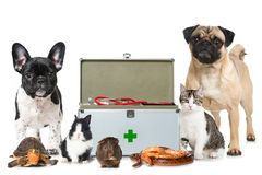 Pets with first aid kit. Isolated on white Stock Photo
