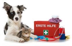 Pets first aid Stock Images