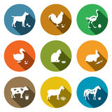 Pets flat icon collection Royalty Free Stock Photography