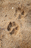 Pets footprint. The photo of pets footprint Royalty Free Stock Images