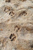 Pets footprint. The photo of pets footprint Stock Image