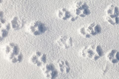 Pets footprints on the snow Royalty Free Stock Photos