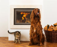 Pets in front of fireplace Stock Photos