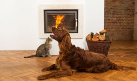 Pets in front of fireplace Royalty Free Stock Photography