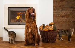 Pets in front of fireplace Stock Photo