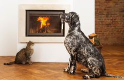 Pets in front of fireplace Royalty Free Stock Photo