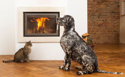 Pets in front of fireplace Royalty Free Stock Images