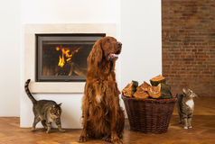 Pets in front of fireplace Stock Photography