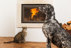Pets in front of fireplace Royalty Free Stock Photos
