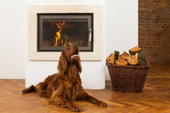 Pets in front of fireplace Stock Images