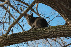 Pets, gray cat,blue sky,animals,under the open sky Stock Image